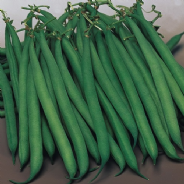 Dwarf French bean Safari - 100 seeds